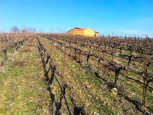 Epoca de poda en Viña Placentina, vinos ecológicos de Extremadura